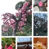 2月の庭の花