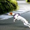 犬のリードを握る手に、ブラジリアン柔術での力の入れ方を応用する。