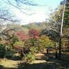 紅葉の「源氏山ハイキングコース」を鎌倉デートお勧めする5つの理由