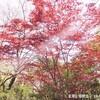 紅葉に桜吹雪