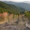 音羽山を登りました。