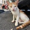 マラッカは猫だらけだった!人なれしていて母猫も仔猫が多い(世界の猫探し46~63匹目)