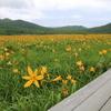 裏磐梯の旅(1)〜雄国沼のニッコウキスゲは満開でした!〜