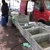 フランスのマルシェで野菜を買う