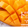 伊良部大橋見ながらマンゴーを食す木曜日の夜