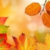 取り組みも秋めいてきました!【俳句カード】