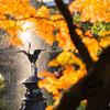 東京の紅葉探し。増上寺→日比谷公園【2017.11.25】