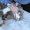 2月前半の #ねこ #cat #猫 その4