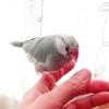 大根の葉を文鳥とハムスターに与えてみると・・/粘土アクセサリーヘアゴムが完成しました(ハンドメイド)