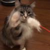 【猫にかかる年間費用】1年間で猫にかかった費用をまとめてみたら結構な金額になった!
