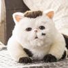 ふくまるが可愛いドラマ『おじさまと猫』