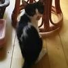 鈴蘭台周辺の猫たち 続報