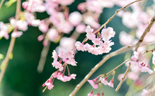 日本語能力試験に学習者を合格させるための「語彙」攻略法