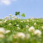 【イヴルルド遙華の婚活運UP講座】星座別!春のオススメデートスポット
