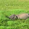 スリランカ旅行19日目・ヤーラ国立公園