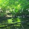 あらえびす 東出融さん『水と森と人類と未来を縄文時代の先に繋げる為に今出来る事』 【お話会】&【身体ワーク】INいなべ