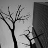 新宿街路樹