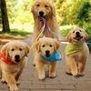 【雑学】犬の実年齢ってわかりますか?