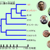 【考察】カルロス・ゴーンはチンパンジー!?