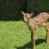 奈良公園「特別公開 子鹿公開」に行って来ました!