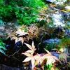 日本の風景に涼を求めて