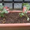 家庭菜園:ミニトマト、なす、オクラ、ルッコラ、小松菜はじめました
