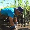 アナウンサーデビューは「池の水を抜く」!?夏の印旛沼で6時間、凶暴カミツキガメの捕獲にチャレンジ!