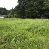 【その①】カインズの除草剤(グリホサート41%)の効果は?荒地の雑草を始末する!