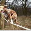 スラックラインのプロフェッショナル犬 Ozzy