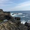 3月22日 城ヶ島にてヒラスズキ