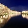【弘前が誇る『日本一の桜』】