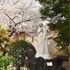 横浜カトリック山手教会の桜2019
