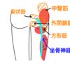 中臀筋と外旋筋に炎症