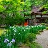京都・上賀茂 -花菖蒲咲く 上賀茂神社 渉渓園
