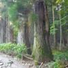 樹木と苔が美しい駒ヶ根の光前寺「早太郎伝説」ゆかりの寺