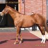 2022年新種牡馬:ベストウォーリア
