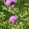 わたしの好きな春の野の花