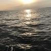 3月26日 名立カブラ釣り