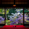 京都・花園 - 妙心寺 長慶院の藤の庭