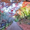 【練習記録】紅葉狩りをしながら持久力を養う│峠走+Mペース走