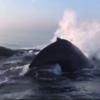 最高に豪華な自然のイベント! クルーズ中に観光客の前で3頭のクジラが大ジャンプ