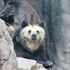 パンダ以外にも見どころいっぱい!【神戸市立王子動物園】