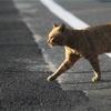 道を渡ろうとする猫 あなたならどうしますか?
