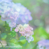 きらきらあじさい写真 と 綺麗な花写真を撮る撮影時のかんたんポイント