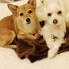 犬の幼稚園・しつけ教室 オープン!