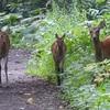 野幌森林公園は楽しい!7  エゾシカ・エゾノウサギ・カラスヘビ!