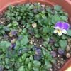 花の数復活^ ^