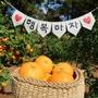 チェジュ島(済州島)カフェ #みかん狩りのできるカフェ「チェジュエインカムギュルパッ」