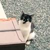 野良猫観察記⑧ クロちゃんとバットニャンの近況