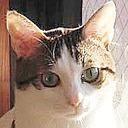 猫の可愛いところはどこじゃ?全部じゃby妖怪ネコママ